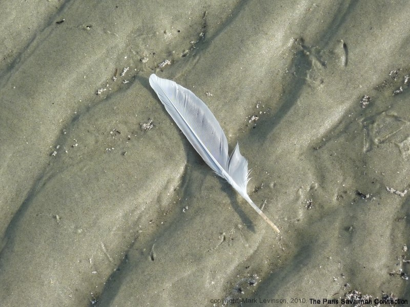 feather on sand