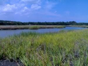sapelo-marshlands_1